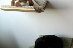 27 Katten hangmat