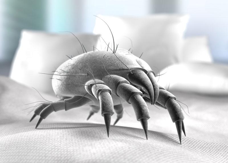 de plek waar huisstofmijten zich het liefst nestelen is in de slaapkamer en dan voornamelijk in het bed