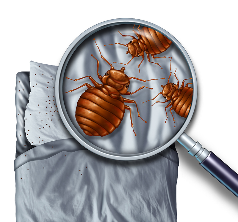 Hoofdkussen blijkt broedplaats ziektekiemen