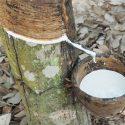 Latex afkomstig van de rubberboom Hevea Brasiliensis