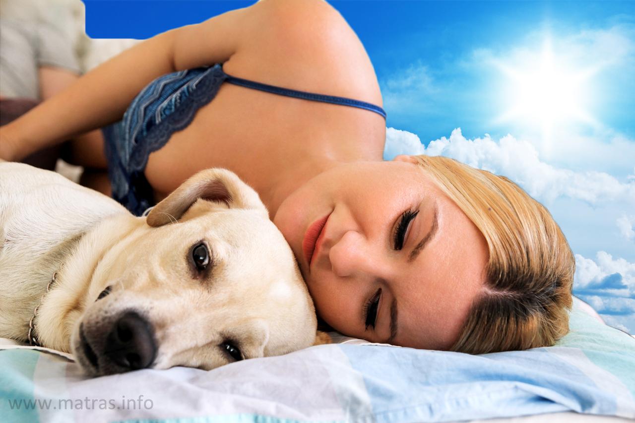 Slapen met je huisdier goed voor je nachtrust