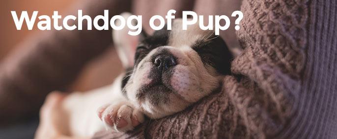 Consumentenbond, watchdog of puppy