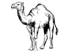 Kamelenhaar als duurzaam matrassen materiaal